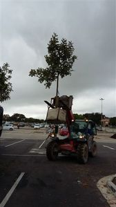 greenacres-shopping-mall-port-elizabeth-landscaping-1