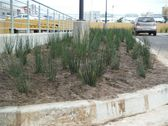 greenacres-shopping-mall-port-elizabeth-landscaping-10