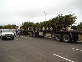 greenacres-shopping-mall-port-elizabeth-landscaping-3