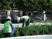 greenacres-shopping-mall-port-elizabeth-landscaping-4