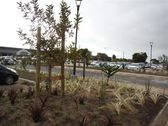 greenacres-shopping-mall-port-elizabeth-landscaping-8