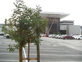 greenacres-shopping-mall-port-elizabeth-landscaping-9